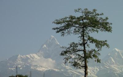 Nepal_267